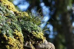 wp-001-Natur-Landschaft-12