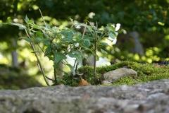 wp-001-Natur-Landschaft-13