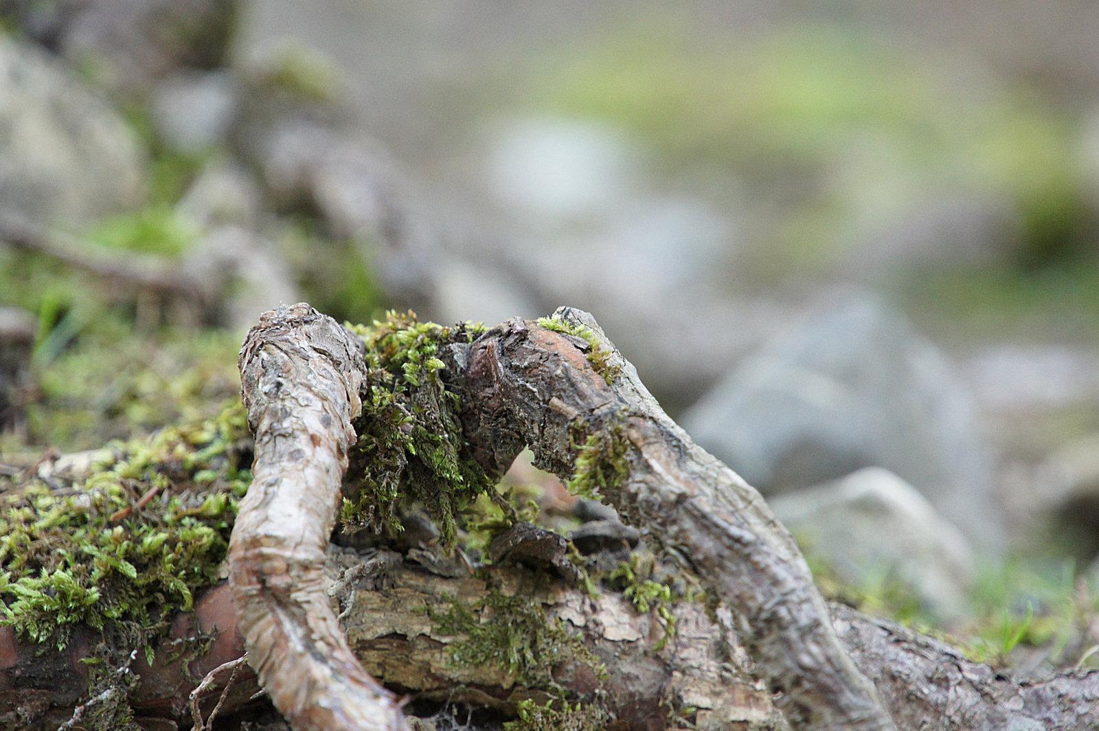 wp-001-Natur-Landschaft-09